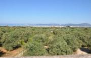 Alghero beautiful villa with sea view._12