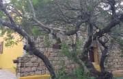San Pantaleo antico stazzo vendita_17