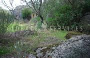 San Pantaleo antico stazzo vendita_43