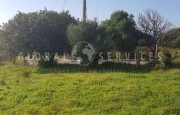 Palau ancient stazzo with farm for sale_18