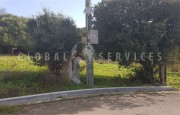 Palau ancient stazzo with farm for sale_24