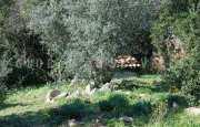 Arzachena Monticanaglia villa for sale_22