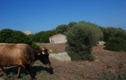 pio Pausania locality Bassacutena. Farm for sale_14